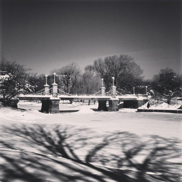 Public Garden Photo Credit @YvetteClaire
