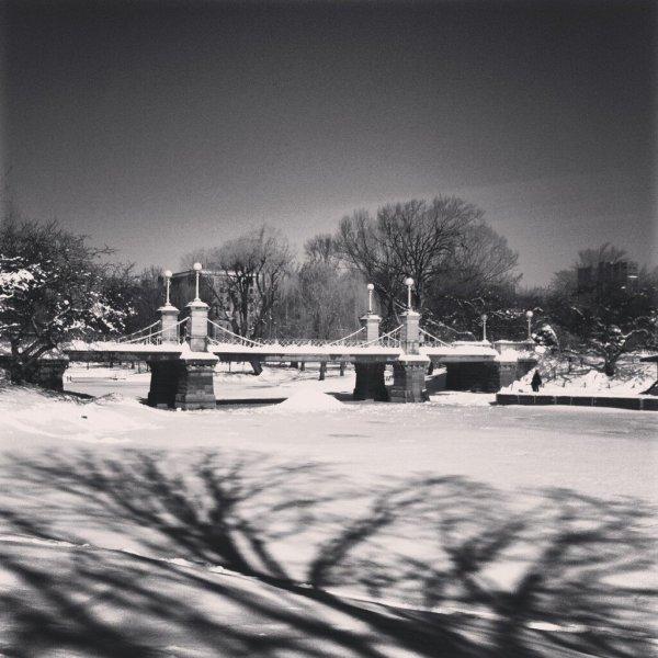 Public Garden Photo Credit @YvetteClaire