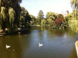 public garden lagoon