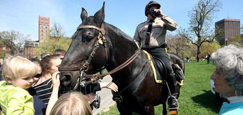 Photo: savebostonhorses.org