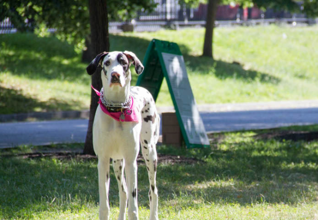 Boston Common Off-Leash Dog Area