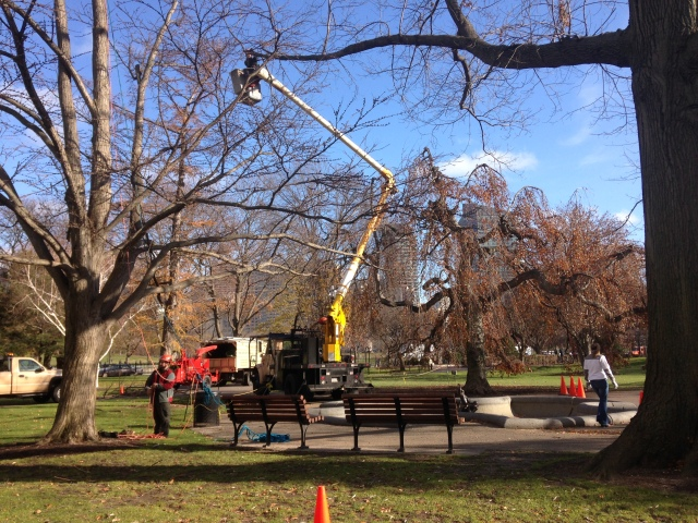 tree_pruning_Dec_enews