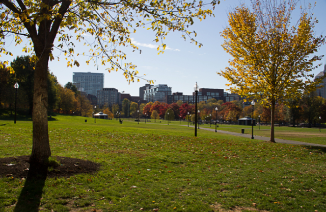 Boston Common by Caroline Phillips-Licari
