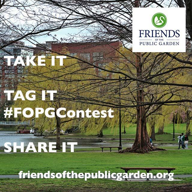 FOPG_Contest640