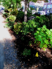 BoylstonStreetBorder_Plantings_Sept2015_Griffiths